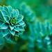 plant-purple-green-macro.jpg by r.nial.bradshaw
