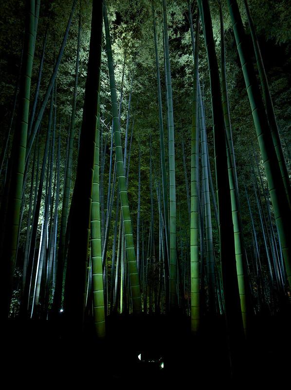 鷲峰山高台寺 竹林ライトアップ(1)