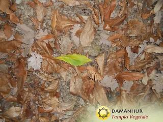 Nature needs no words #DamanhurTempioVegetale #contactplantworld