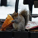 Squirrel does it New York style by Goggla