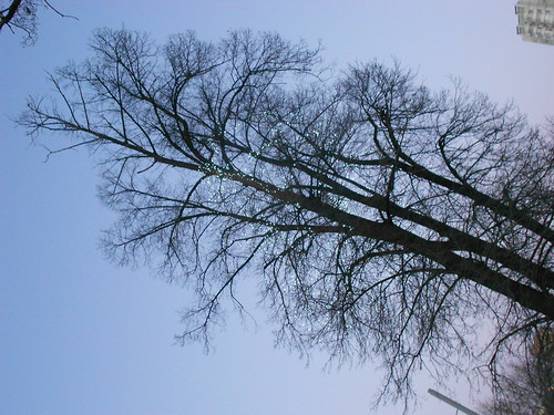 одно дерево норм