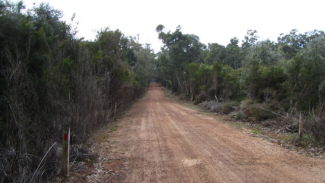 Day 35: Karri Hill Road
