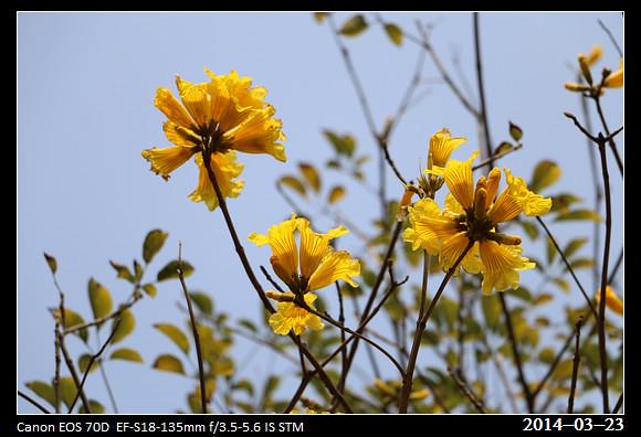 9_20140323_Yellow2