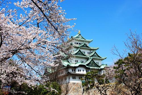 Nagoya Castle Sakura 046r