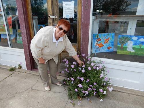 petunia flower pink sidewalk carolina sc springfield cultivated weed solanaceae ornamental petals corolla