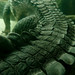 Small photo of African Slender-snouted Crocodile