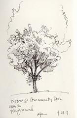 Tree at Community Park