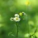 野の花 by * Yumi *
