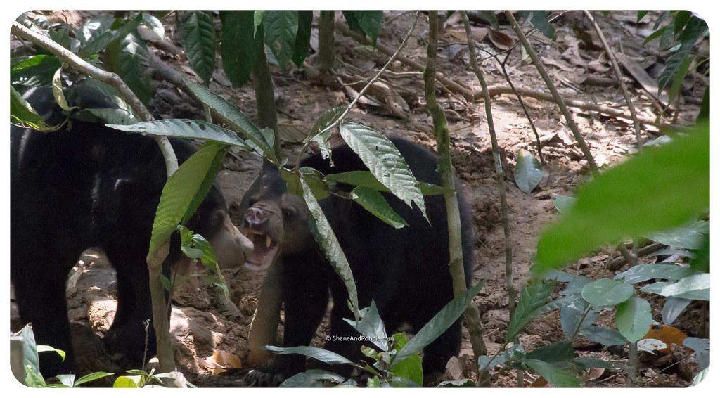 Borneo-20170413-_MG_8121