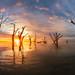 Bonney sunrise by Dylan Toh
