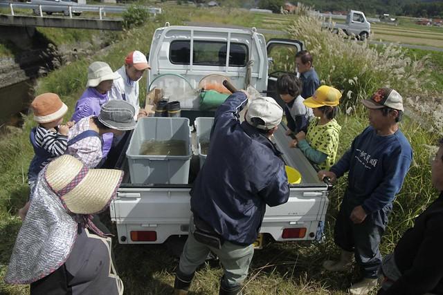 軽トラに積まれたサツキマスに見入る参加者たち.