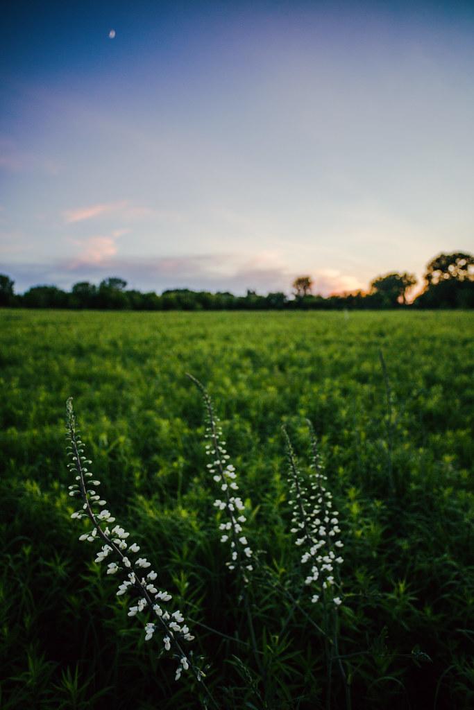 IMAGE: http://farm3.staticflickr.com/2822/9070802561_6f3ee7dc14_b.jpg