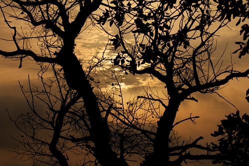 sun tree sol sunrise arbol amanecer