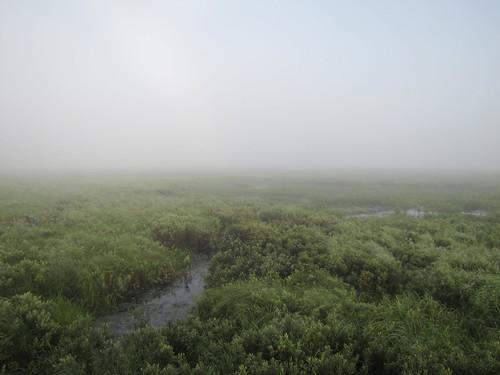 Sunkhaze Meadow