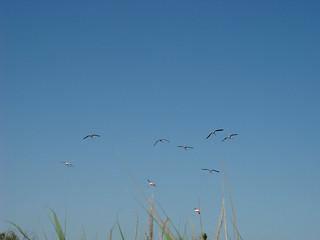 176 vliegende flamingo's