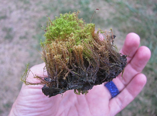 This is just one chunk of moss Michael cleaned out of the trailer taillights!