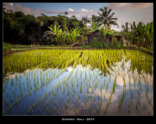 sunset bali reflection colors indonesia asia couleurs olympus reflet asie ricefields indonesie sidemen rizieres jpmiss e620