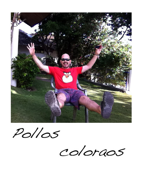 Pollos coloraos.jpg