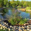 Chambre d'hôte - Luberon avec une piscine naturelle écologique (42)