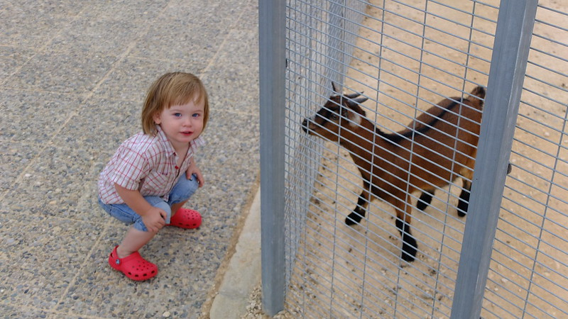 Fergus with the animals at the Family Park