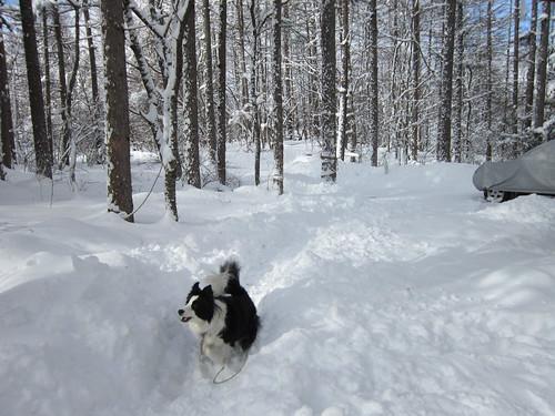 まだ雪かきの途中です・・・2014.1.9  10:47 by Poran111