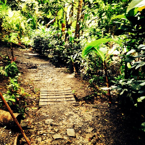 St. Lucia Rainforest by czolkie10
