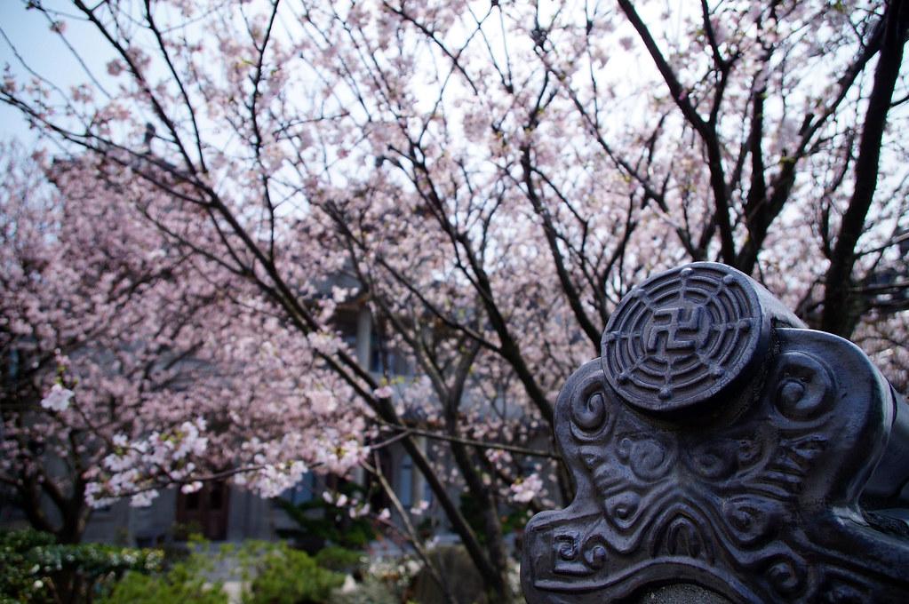 東方寺。櫻