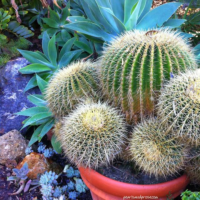 cacti_web