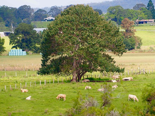 Rural scene in Greenhill