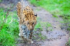 twycross zoo  -3238