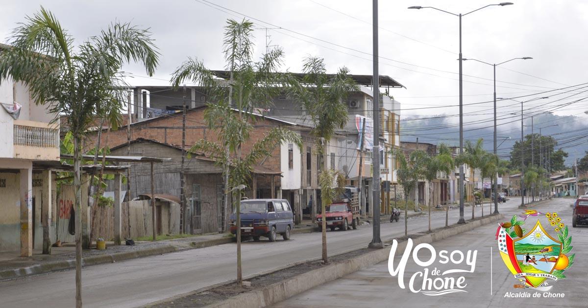 Embellecen el parterre de la avenida 14 de Agosto con palmeras
