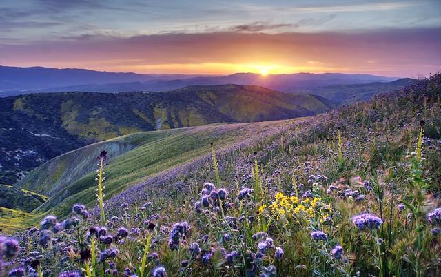 Super bloom in California desert