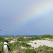 Small photo of African Penguin & Rainbow