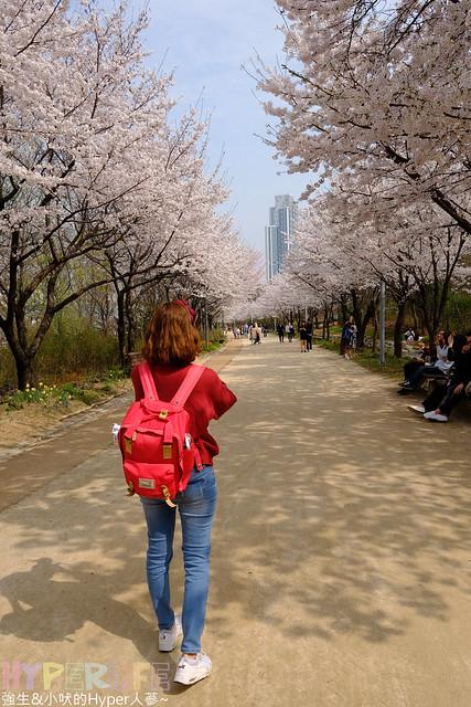 首爾林seoul forest (42)