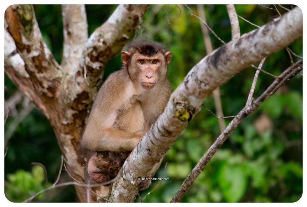 Borneo-20170411-IMG_7525