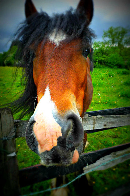A Horse, Of Course [150/365]