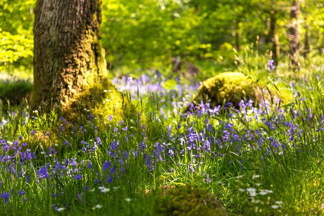 Woodland prettiness