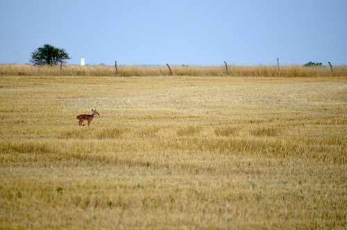 A little Bambi lost in the field