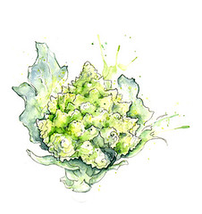 Edible Plants: Romanesco