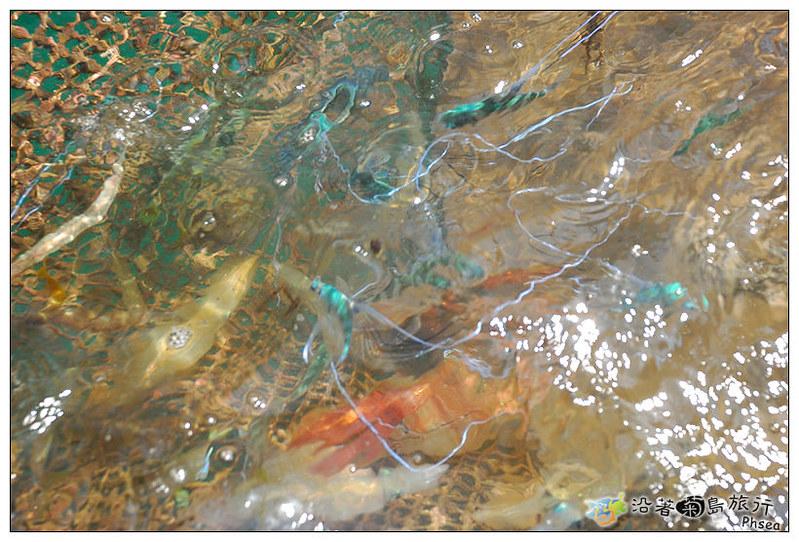 2013元貝休閒漁業_39