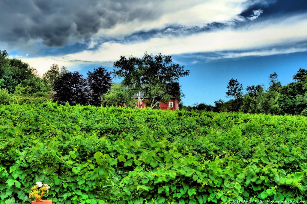 Lost Acres Vineyard