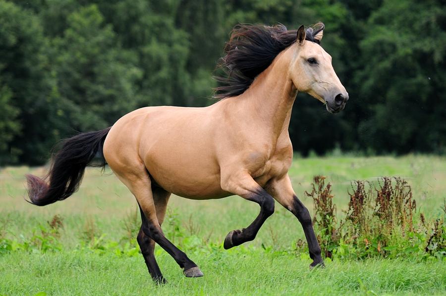 De Mooiste Paarden Van Heel Bokt D Bokt Nl