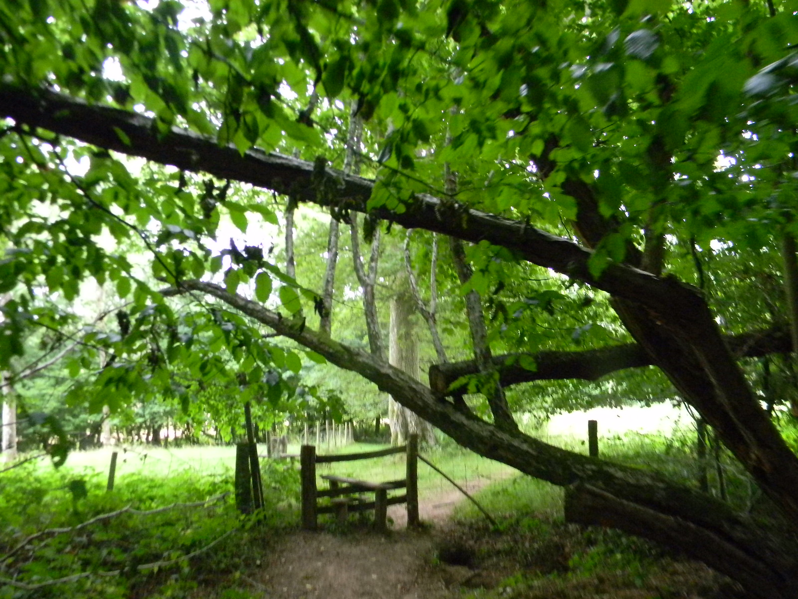 Branch and stile Wadhurst Circular