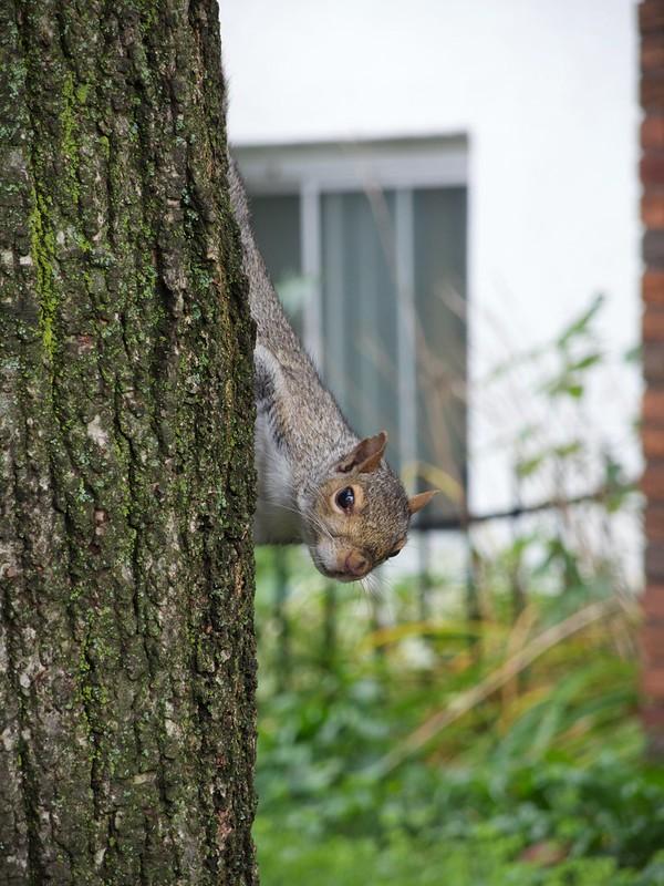 Celui-là s'amusait à me faire des coucous d'un côté et de l'autre de l'arbre.. héhé ! by carbmac