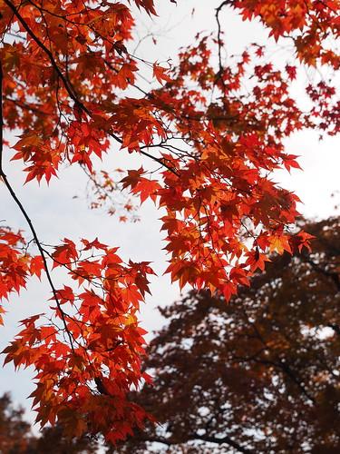 神護寺 地蔵院 紅葉