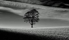 Black and White / Monochrome