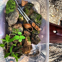 Rescue #terrarium no. 4 'Elias' in progress. The excavators are already at work. We barely got these fellas out in time.