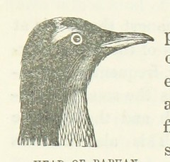 """Image taken from page 221 of 'Narrative of the Wreck of the """"Favourite"""" on the Island of Desolation: detailing the adventures, sufferings and privations of J. Nunn, an historical account of the Island, and its whale and seal fisheries. Edited by W. B. Cla"""