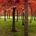 Each of the 400 trees has got a name by B℮n