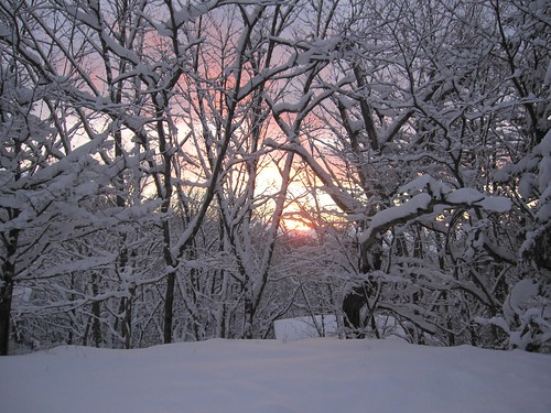 ⑩木々の向こうに落ちてゆく夕日が見えます by Poran111